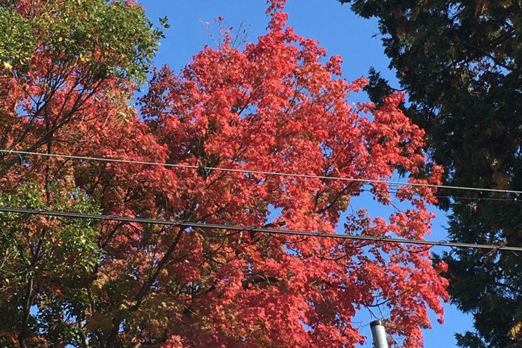 小さい秋見つけたぁ~♪