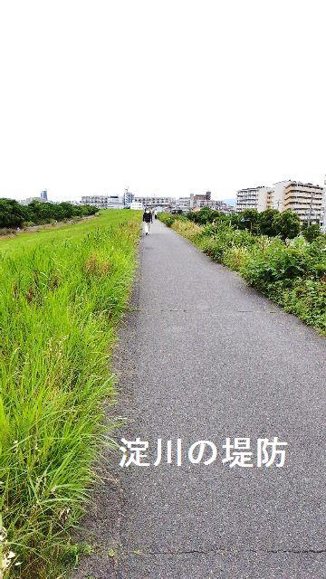 淀川堤防ウォーキング
